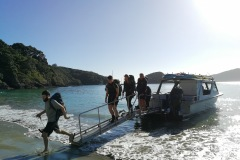 great-barrier-island-hike-new-zealand-1