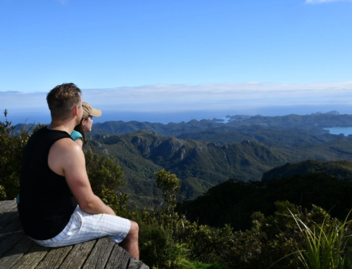 Got To Get Out on Great Barrier Island
